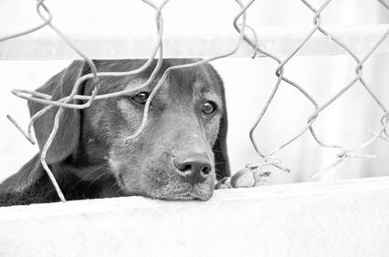 Pies w schronisku dla zwierzt